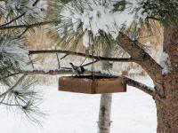 chickadee-on-a-snowy-day.jpg