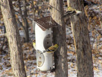 goldfinch-group.jpg